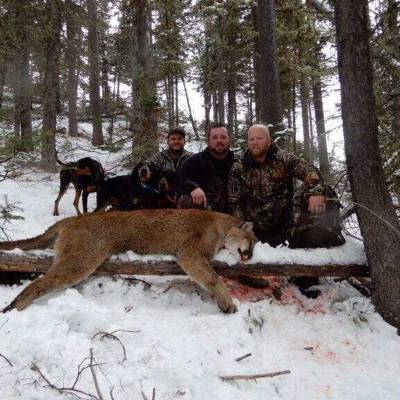 Mountain Lion 1x1, Guided w/ Hounds
