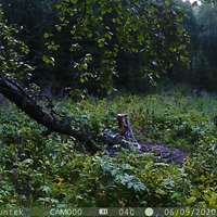 Maral hunting during the rut in 2022