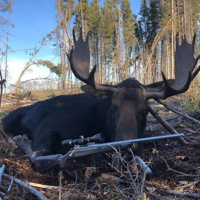 LAST SPOTS! Archery Moose Hunt