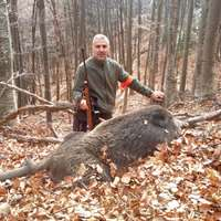 3 Days Wild boar hunt