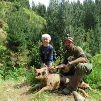 Wild Hog Hunting with Dogs 1x1
