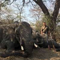 Non Trophy Own Use Elephant Hunt 2019