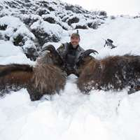 Free range Tahr hunting Private land