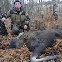 European moose hunt
