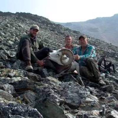 Dall's Sheep Hunt in Central Alaska '20