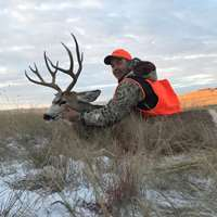 Mule Deer Rifle, 2020, MS