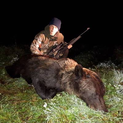 European brown bear hunt