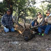 Spike Elk Rifle Hunt OTC Tags '2020