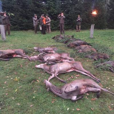 Deer & Boar Driven Hunt / Opole