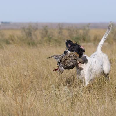 Upland Hunting Guided 4 day/3pers. min