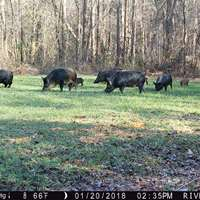 2 Day Unlimited Hogs Hunt '19