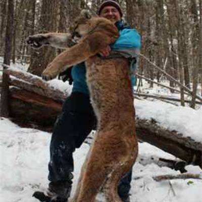 7 Day Mountain Lion Hunt