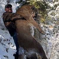 Mountain Lion Hunt '19-20