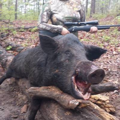 Guided Hog Hunt