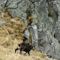 Chamois Hunt - Fix Price Offer