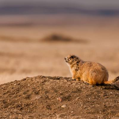 Prairie Dog 2019 Hunt
