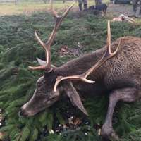 Red Deer Hunting in Gniezno