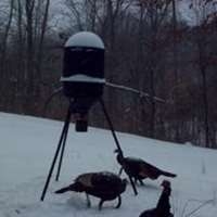 42 Turkeys Counted on Plot Last Week
