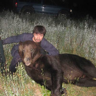 European brown bear hunt fall
