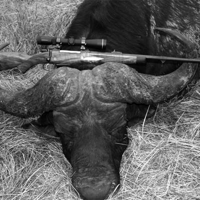 Cape Buffalo Hunt 1x1 + 1 Observer incl