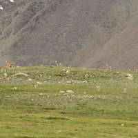 Community-Based MARCO POLO SHEEP