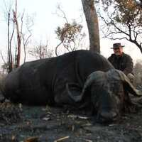 Hot!! Cancellation Cape Buffalo Hunt
