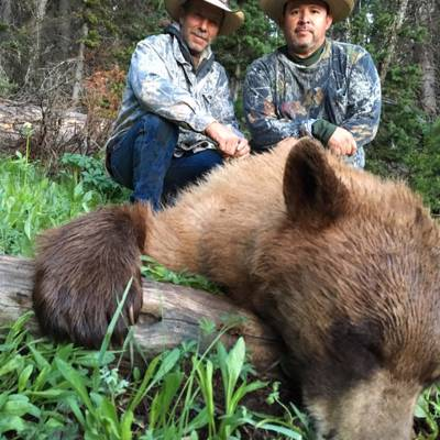 Wyoming Spring Baited Black Bear Hunt