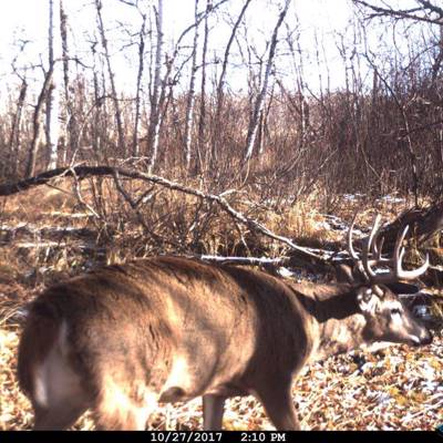 5 days Whitetail deer Interlake Area '20